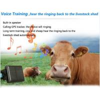 Fitness Apps For Android additionally Solar Product moreover S Wireless Tracking Device additionally 151776709624 as well Pat Nav To Track Cow Herd 65401. on cow gps tracking