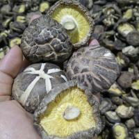 China Factory Price Premium  Bulk Dried Tea Flower Mushroom Shiitake Whole with Cap 4-6CM on sale