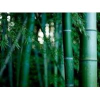 China Eco-friendly plain bamboo fabric for quilts silky feeling machine washable on sale