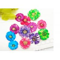 Buy cheap Small Daisy Natural Real Pressed Flowers True Plants Specimens For DIY Photo Frame product