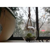 Buy cheap Clear Glass Hanging Terrarium / Hanging Glass Plant Holders Anti Corrosion product
