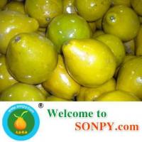 Buy cheap shatian pomelo,fruits product