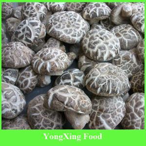 China Wholesale Mushroom,Dried Flower Mushroom on sale