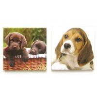 Buy cheap Printed Dog Picture Fridge Magnet Make Your Own for Kids / Magnets For Refrigerator product