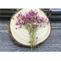 Buy cheap DIY Handmade Long Dried Flowers , Babys Breath Materials Real Dried Flowers product