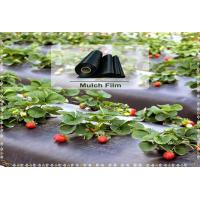 China Black Color Agricultural Film  Plastic Mulch Film For Agricultural & Gardening on sale