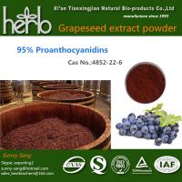Buy cheap Grape Seed Extract product