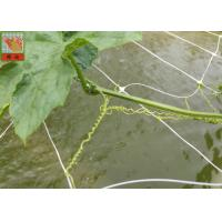 PP Agricultural Netting For Plant Support , White Color BOP Plastic Mesh Netting