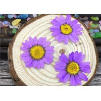 Quality Chrysanthemum Real Pressed Flowers Material Specimens For DIY Art Paper Decoration for sale