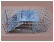 Squirrel Trap Cage