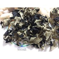 China Factory Price Premium NEW CROP Dried White Back Black Fungus within 5 CM (Auricularia Auricula) on sale