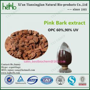 Buy cheap Pinus pinaster Pink Bark Extract product