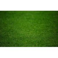 Buy cheap Hottest:artificial turf for golf from wholesalers