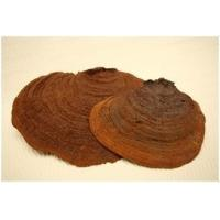 Buy cheap Organic Phellinus linteus powder product
