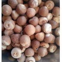 Buy cheap Whole Dried Betel Nuts 70% /Dried Betel Nuts/Processed Betel Nuts product