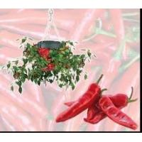 Buy cheap Topsy Turvy Chilli Planter (PP-012) product