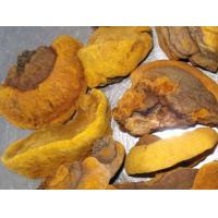 Buy cheap Organic Phellinus linteus extract product