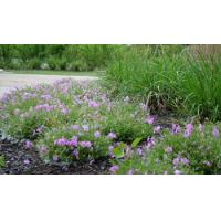 Buy cheap Beautiful Leisure grass (The best in China) product