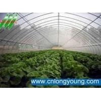 single span agricultural greenhouse