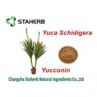 China Yucca Schidigera Extract Natural Feed Additives Yocoin Yucca Powder on sale