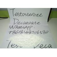 Quality Testosterone Decanoate Powder , Test Deca Anabolic Steroid Hormones for sale