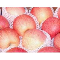 Buy cheap Red Fuji Apple product