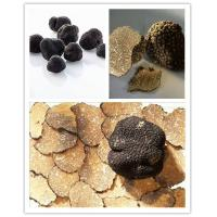 China Black Truffle Black Truffle Powder on sale
