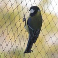 Buy cheap Anti-bird Net,15-30mm opening,1m-25m width,black,white and green colour product