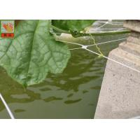 Buy cheap PP Materials Plant Climbing Netting Insect Barrier Netting 3.0M Wide product
