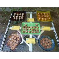 Buy cheap VIET NAM - DRIED BETEL NUT & SPLIT product
