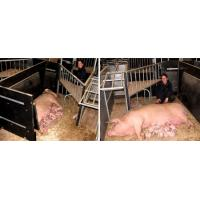 Farrowing pen