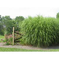 Buy cheap decoration materials plastic grass product