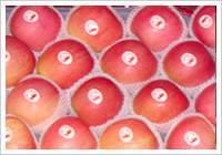Buy cheap Fresh Fuji Apple product