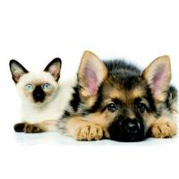China Pet Stain & Odor on sale