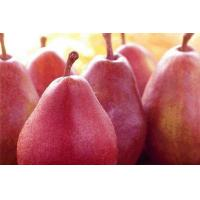 Buy cheap Agricultural Products Pear product