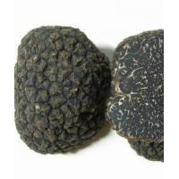 China Black Winter Truffle on sale