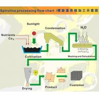 Spirulina Cultivation&processing chart