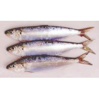 Buy cheap Spiral shell Product Sardine product