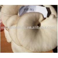 Buy cheap Oyster Mushroom product