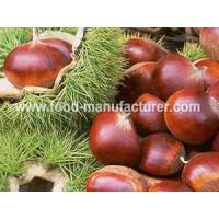 Buy cheap Freeze Dried Fruit Freeze Dried Chestnut product