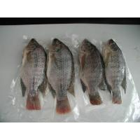 Buy cheap Black Tilapia ( Whole Round, GS, GGS ) from wholesalers