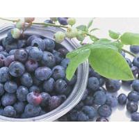 Buy cheap Introduction of fresh blueberry fruits from Wholesalers