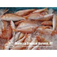 Buy cheap Red Mullet product