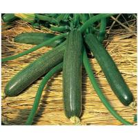 Buy cheap squash SUNNY HOUSE from Wholesalers