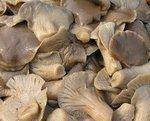 Buy cheap pickled mushrooms product