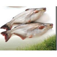 Buy cheap Whole Pangasius product
