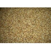 Buy cheap Gansu excellent products Coriander  seed from Wholesalers