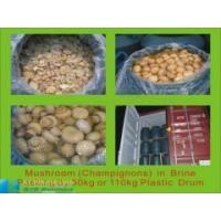 Buy cheap canned mushroom and brined mushroom in drums product