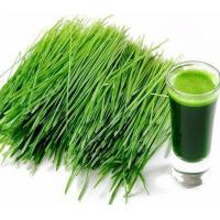 Buy cheap Herbal Extract Barley Grass Powder product