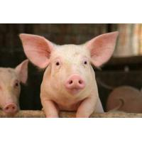 Buy cheap Pig Starter Feed product